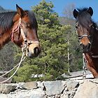 Two Horses in a Mountain Forest by Ashleigh Johnson