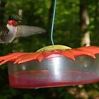 Male Ruby Throated Hummingbird by KyleMWhite