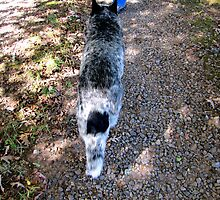 Blue in Dappled Shadow by Jean Gregory  Evans