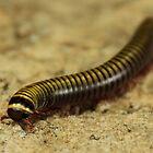Centipede by SuddenJim