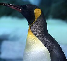 king penguin by Trish Threlfall