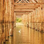 Under The U Bein Bridge by Liza Barlow