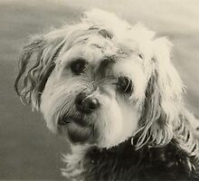 Vintage Scruffy by Jo Lyons Photography