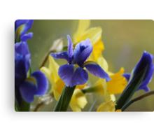 Iris's and Daffodils Canvas Print