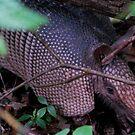 Armadillo in the Brush by Diane Blastorah