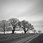 Richmond Park by photontrappist