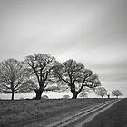 Richmond Park by photontrappist