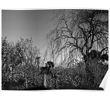 Wild Weeping Willow Poster