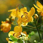 Yellow Passion  by Diane Blastorah