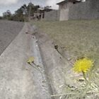 dandelion in the gutter by sharpbokeh