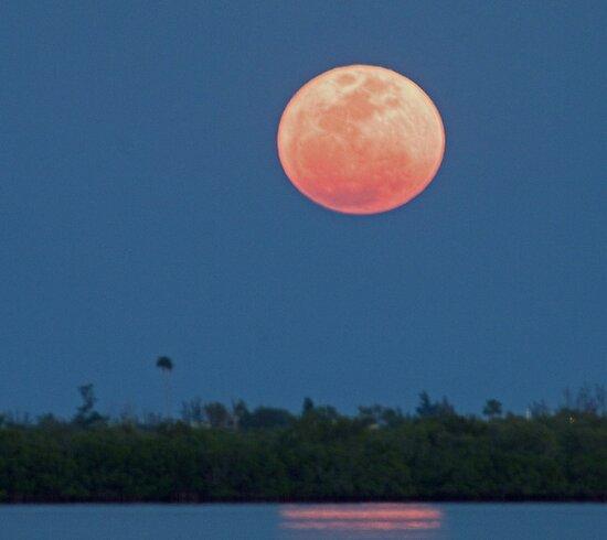 Island moon by Larry  Grayam