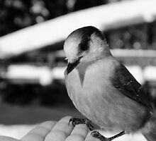 First Contact Black and White by Michael Garson