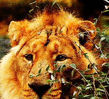 Camouflaged Asiatic Lion by buttonpresser
