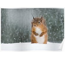 Red Squirrel in the Snow Poster