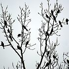 Blackbirds in Silhouette by astonishann