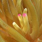 Sea Anemone Macro by Leon Heyns