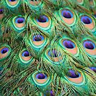 Peacock Feathers by vivsworld