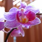 Last Orchid Blossoms by Glenn Cecero