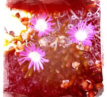 Hipsta beach flowers by LJ_©BlaKbird Photography