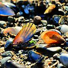 Sea Shells by John Hare