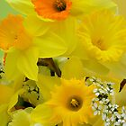 Spring Elegance by NatureGreeting Cards ccwri