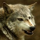 Wolf Snarl. by Mark Hughes