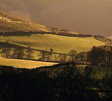 Golden Landscape by Paul Bettison