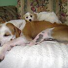 Best friends by chrissy mitchell