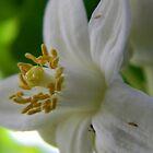 Velvet Spring by Leyla Hur