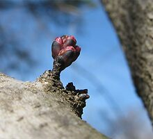 A Sure Sign Of Spring by Ginny York