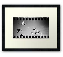 pigeons, phnom penh, cambodia Framed Print