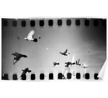 pigeons, phnom penh, cambodia Poster