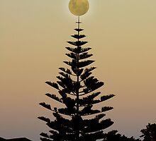 Western Australia Scenery by Julia Harwood