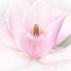 日本の信仰希望の方は好き by imagejournal