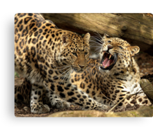 Get Off My Patch! Canvas Print
