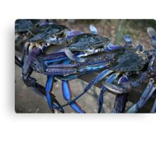 Crab Catch Canvas Print