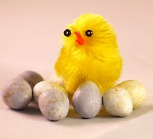 Easter Chick by AmandaJanePhoto