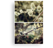Spring - Catkins Canvas Print