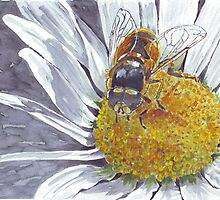 The Hoverfly and the Daisy by Maree Clarkson