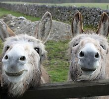 Smiling Donkeys! by Mike Paget