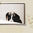 Arwen -In The Bath -Boxer Dogs Series- by Evita