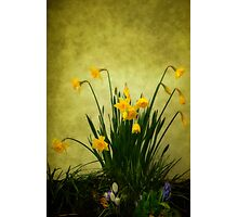 The Spring Collection Photographic Print