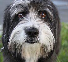grumpy dog by anton smith