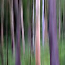Purple Forest Impression by Kitsmumma