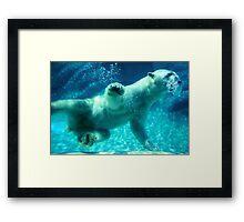 NC Polar Bear Framed Print