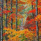 FOREST, AUTUMN by Chuck Wickham