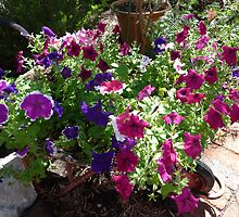 Wheelbarrow of Petunias by joycee