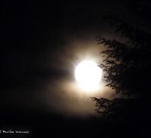 Supermoon IV 19/3/11 by Photos - Pauline Wherrell