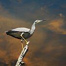 High Perch by byronbackyard