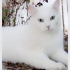 Casper Maxwell Snow by Karen Kaleta